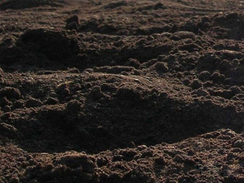 Ещё один вид торфяного грунта