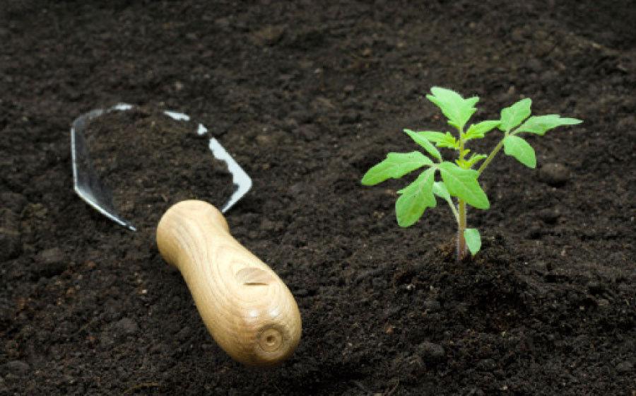Растительный грунт для выращивания рассады