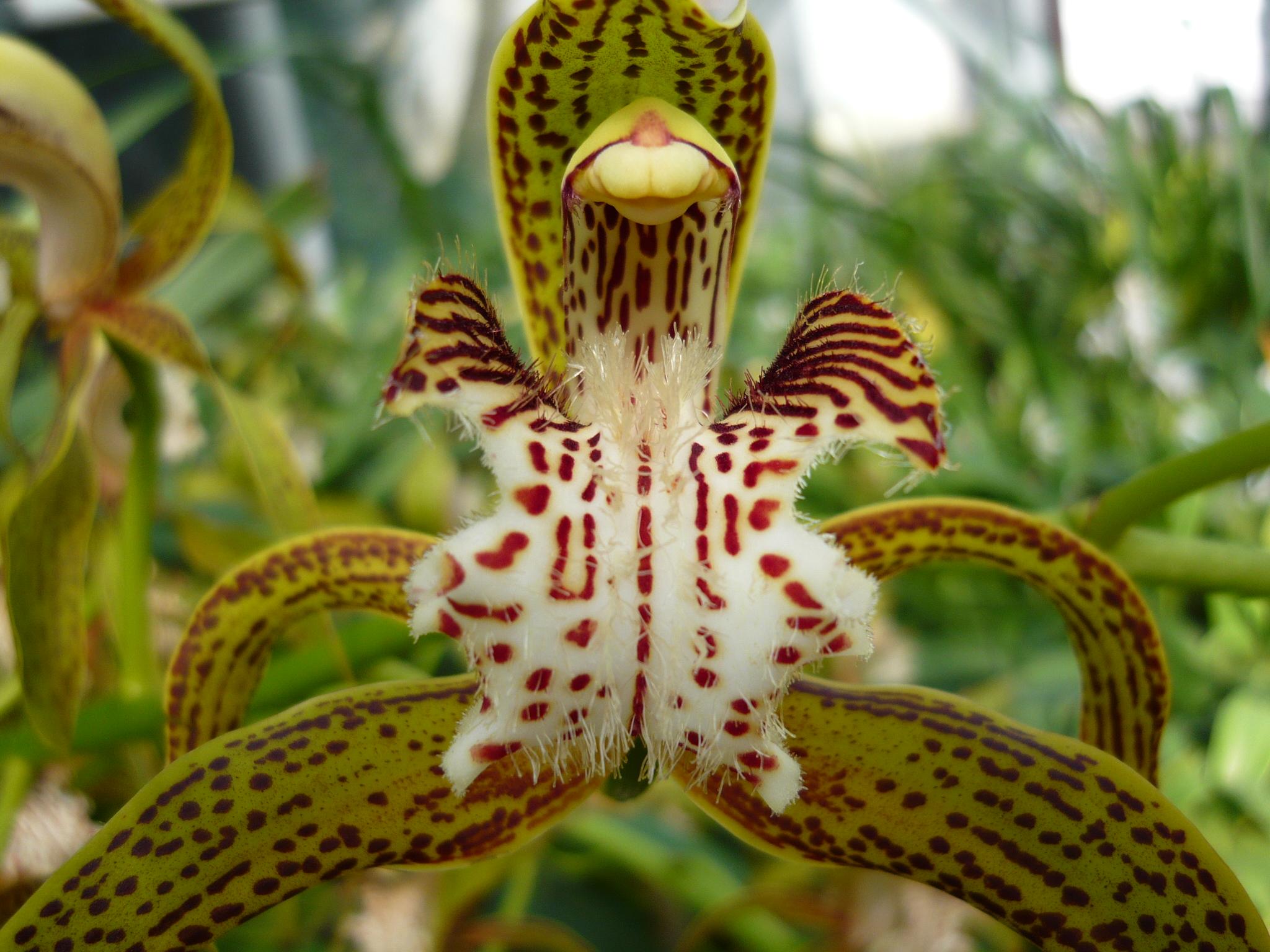 Выращивая орхидеи необычных форм и расцветок, можно устраивать экскурсии и выставки