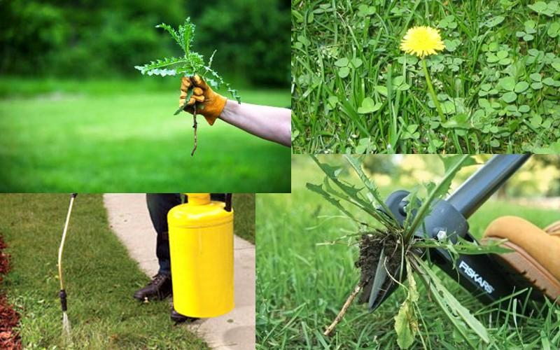 Инструкция к гербицидам в данном случае требует проведения качественной подготовки.