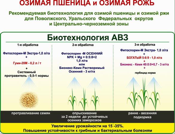 Обработка гербицидами озимой пшеницы осуществляется не только для борьбы с сорняками, но и с целью борьбы с вредителями.