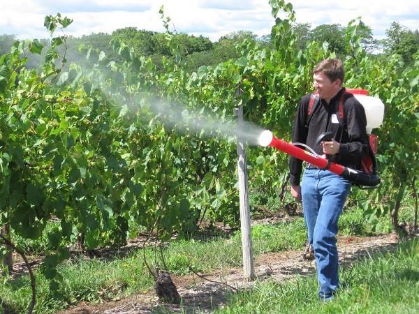 Опрыскивание деревьев, возрастов, менее трех лет, не проводится. Обрабатывать садовые участки необходимо летом в период активного роста сорняков.