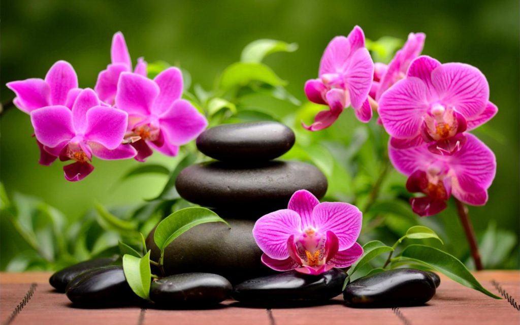 Орхидея подходит для любых стилистически оформленных помещений