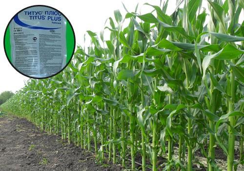 Пользователь обязательно должен выполнять требования при обращении с пестицидами, что обеспечит высокий уровень безопасности в период проведения процедуры и после нее.