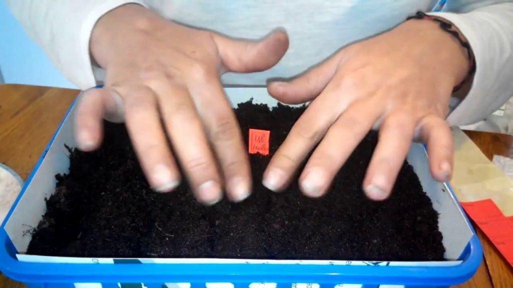 Пример посадки семян капусты для рассады