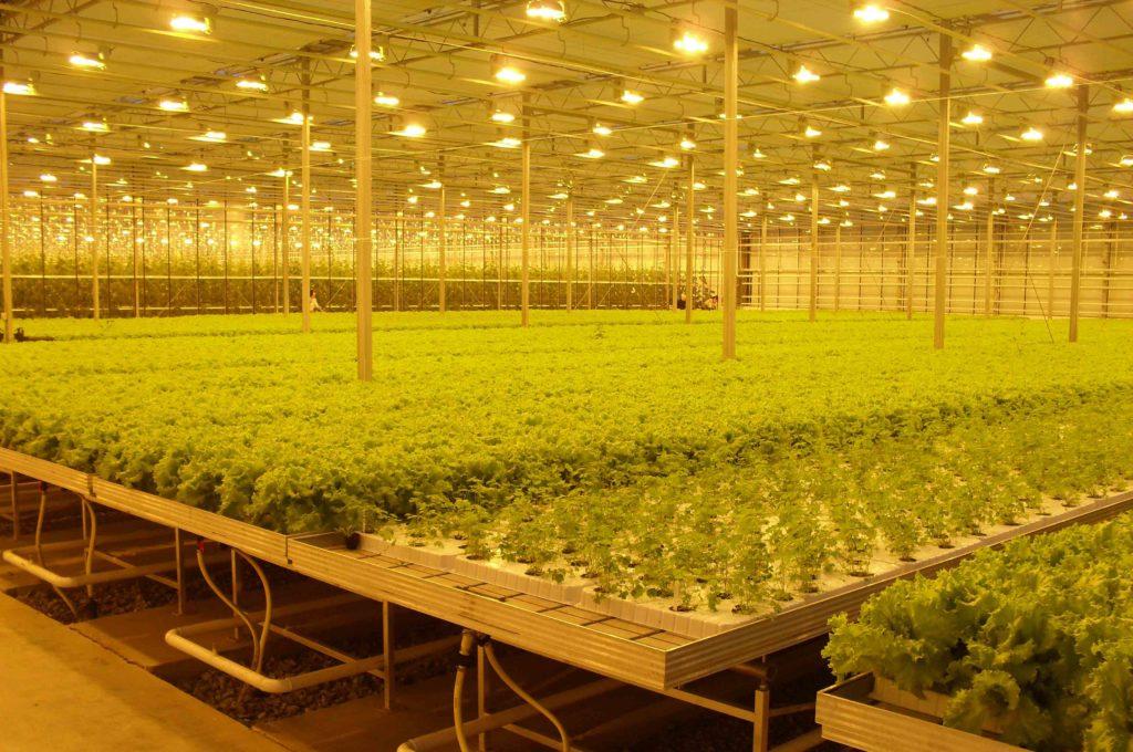 Выращивание растений под по 194