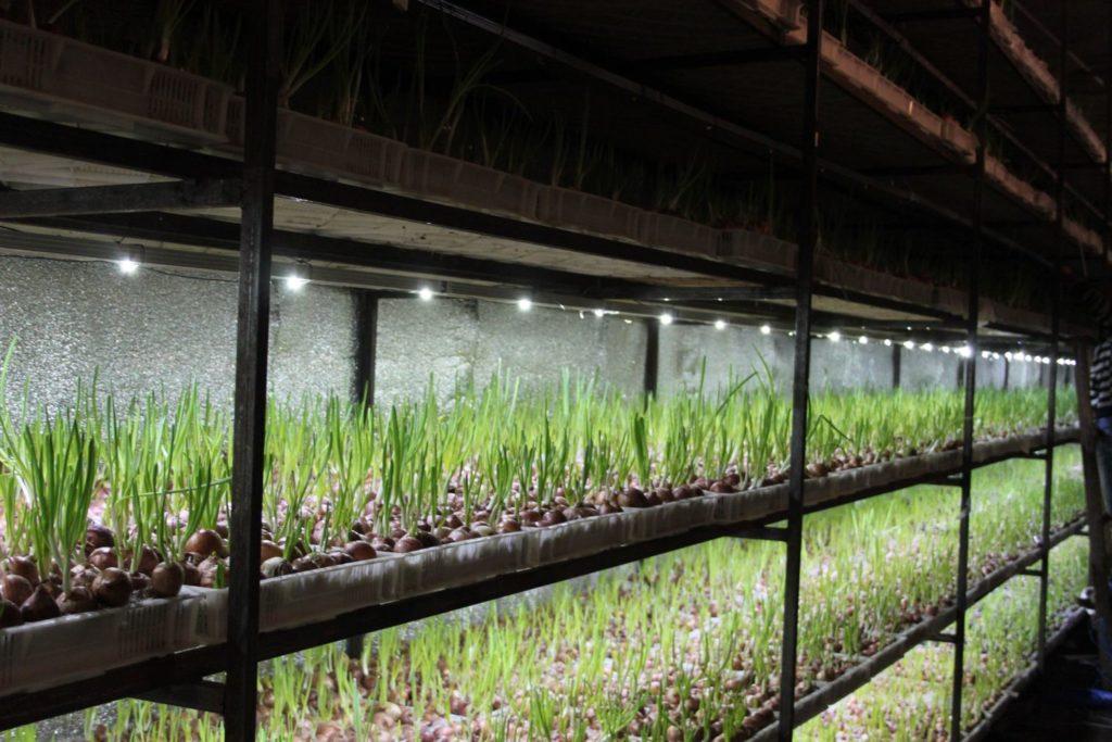 Вы видите пример, какие стеллажи можно использовать в теплице для выращивания овощей