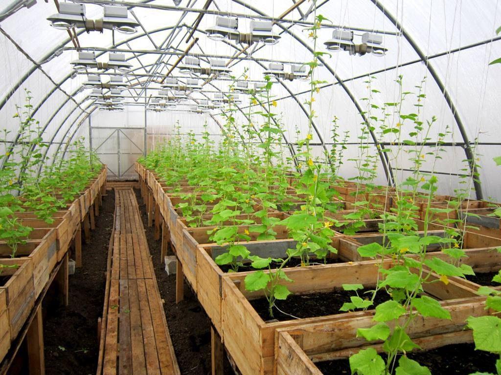 Деревянные стеллажи-короба в теплице, для выращивания огурцов