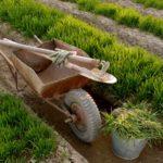 Далее, можно добавить состриженную зелень с газона