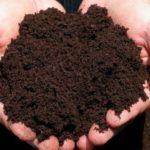 Имеет большое количество различных питательных веществ и микроэлементов