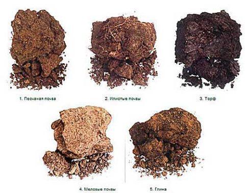 Как квалифицируются плодородные грунты.