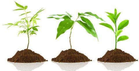 Как применяется грунт для повышения плодородия.