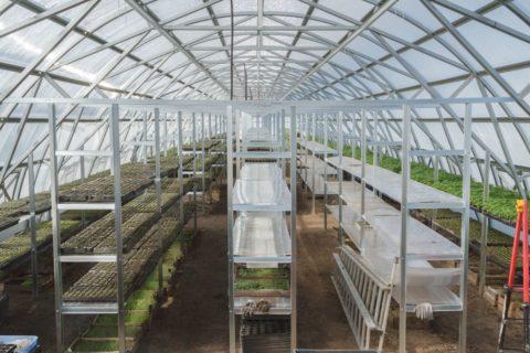 На фото металлические стеллажи, предназначенные для выращивания зелени.