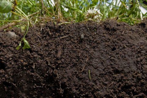 Перемешиваем землю с компостом.