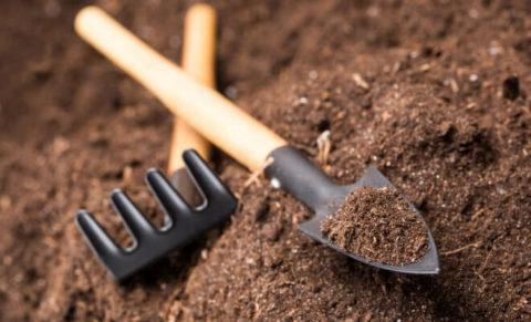 Что такое растительный грунт, характеристики.