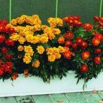 Для рассады цветов в домашних условиях