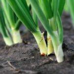 Для выращивания овощей