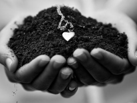 Грунт растительный плодородный чернозем и его применение.
