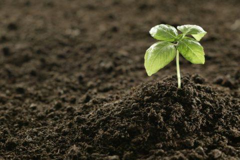 Характеристики растительного грунта и его применение.