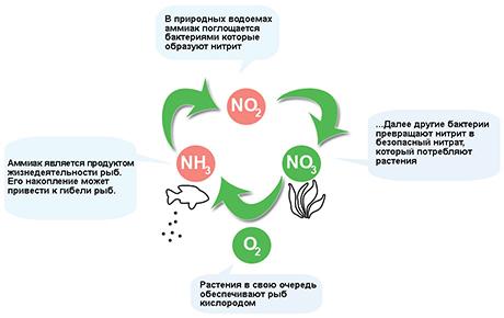 Как происходит органическое соединение.