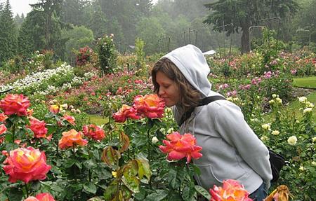 Красивые розы: уход в открытом грунте