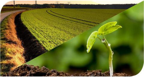 Применение растительного грунта.