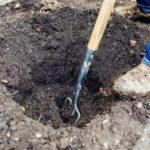 Выкапываем ямы 50-80 сантиметров в зависимости от корня растения