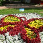Выращивание цветов и ландшафтный дизайн