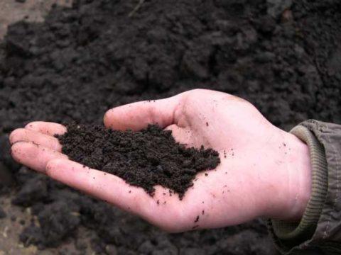 Высокая плотность грунта растительного.