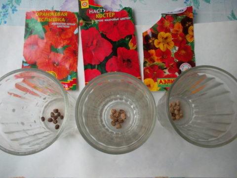 Семена капуцинов можно залить водой прямо в стакане