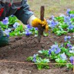 Выкопайте ямку, залейте её водой, поместите растение и уплотните землю вокруг