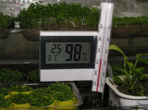 Высокая влажность воздуха – обязательное условие для прорастания семян и развития ростков