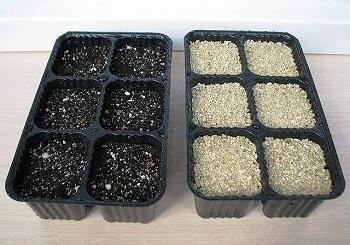 Заделывание семян
