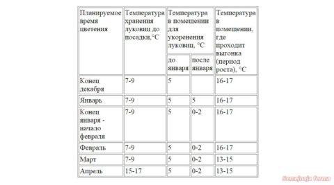 Температурные режимы при выгонке луковиц нарциссов