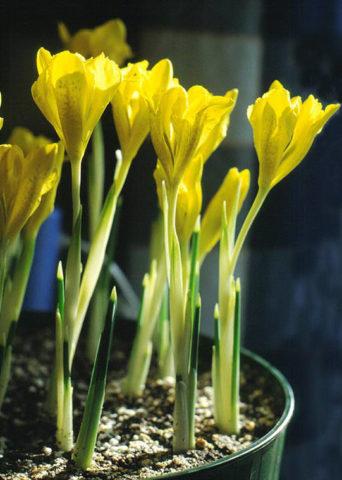 Высадка растений в емкости