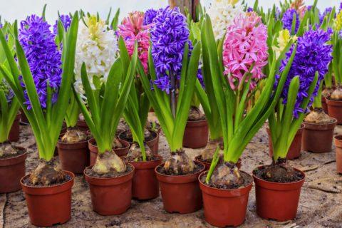 Выращивание цветов с удобрениями