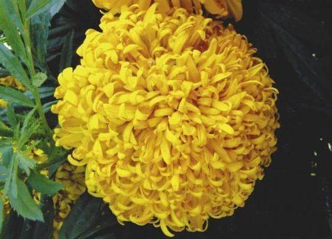'Gelber Stein' или Желтый камень