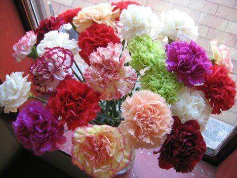 Разнообразие расцветок впечатляет