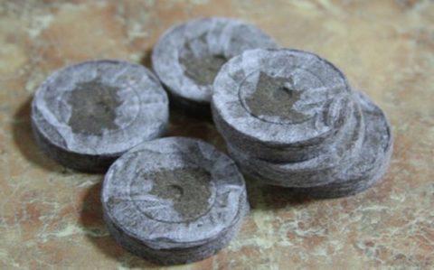 Торфяные таблетки тоже подходят для выращивания рассады