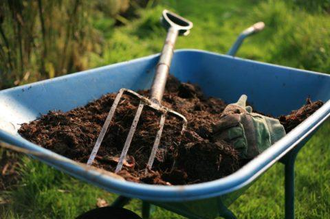 Заготовка почвенной смеси для черенков гвоздики
