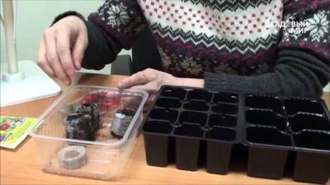 Подготовка емкостей для посева