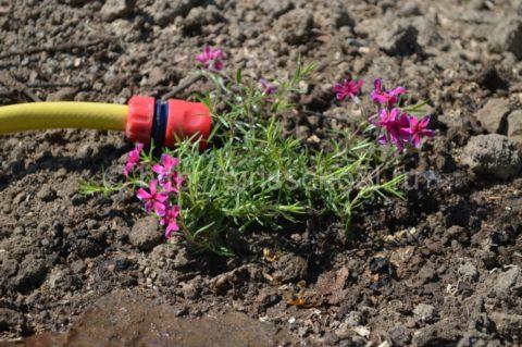 Поливать растения желательно под корень