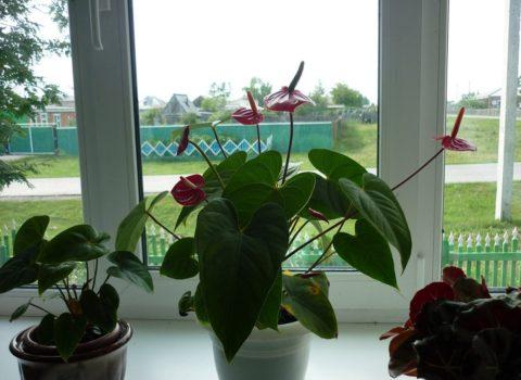 На растение не должны падать солнечные лучи