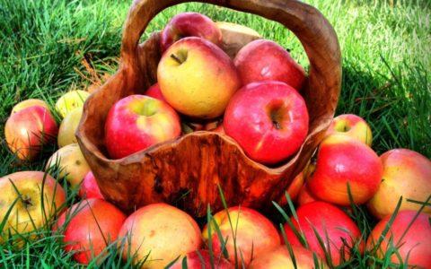 Спелые яблоки – натуральный поставщик этилена