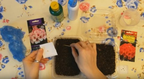 Посев семян в рассадочные емкости