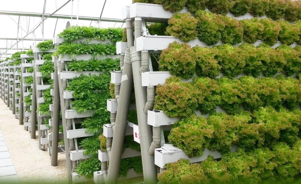 Выращивание в теплицах зелени 32