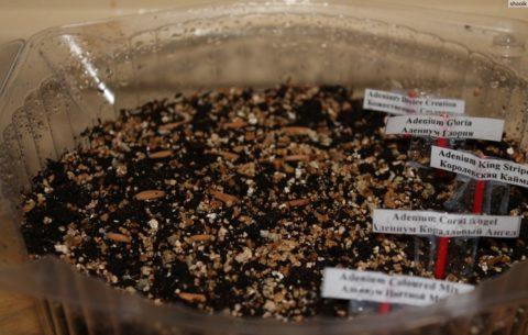 Рассадочная плошка с семенами
