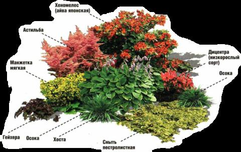 Пример использования гейхеры в ландшафтном дизайне
