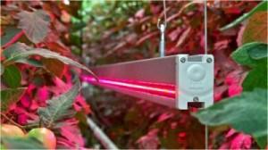 Лампы с красным спектром положительно влияют на цветение и плодоношение