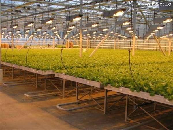 Тепличный бизнес: что выгодно выращивать в теплице на...